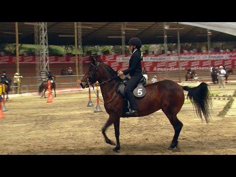 Equestrian Implements, Horse tack - TvAgro por Juan Gonzalo Angel