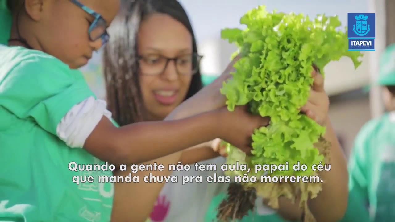 Estudantes iniciam colheita de horta escolar