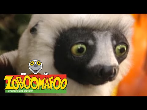 Zoboomafoo 225 - Brain Power (Full Episode) - PakVim net HD