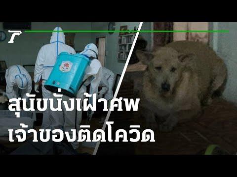 ผู้ช่วยกุ๊กติดโควิดเสียชีวิตในบ้าน สุนัขนั่งเฝ้าศพทั้งคืน | 310864 | ไทยรัฐนิวส์โชว์