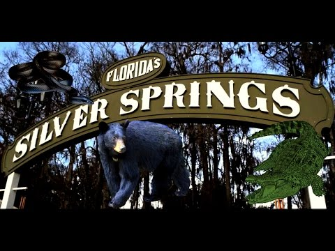 Beautiful Silver Springs State Park ~ Camping ~ Snakes, Alligators, Bears, Oh My!