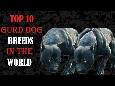 Top ten Gurd Dog Breeds In The World