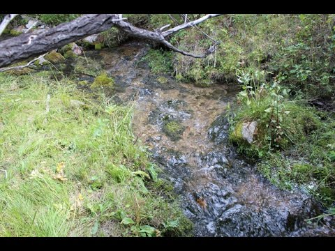 Exestential Gold 20 Acre Placer Mining Claim on Trout Creek Montana