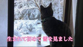 春生まれのムタさん☆ 雪を見るのは 初めてです!!! 実際に 手元で見せ...