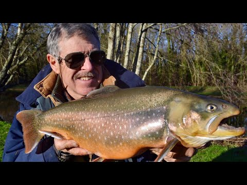 Catch & Cook - GIANT ARCTIC CHAR | BEST EATING FISH
