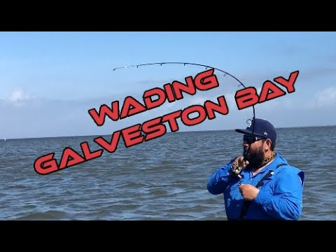 Tons Of Fish Wading In West Galveston Bay!