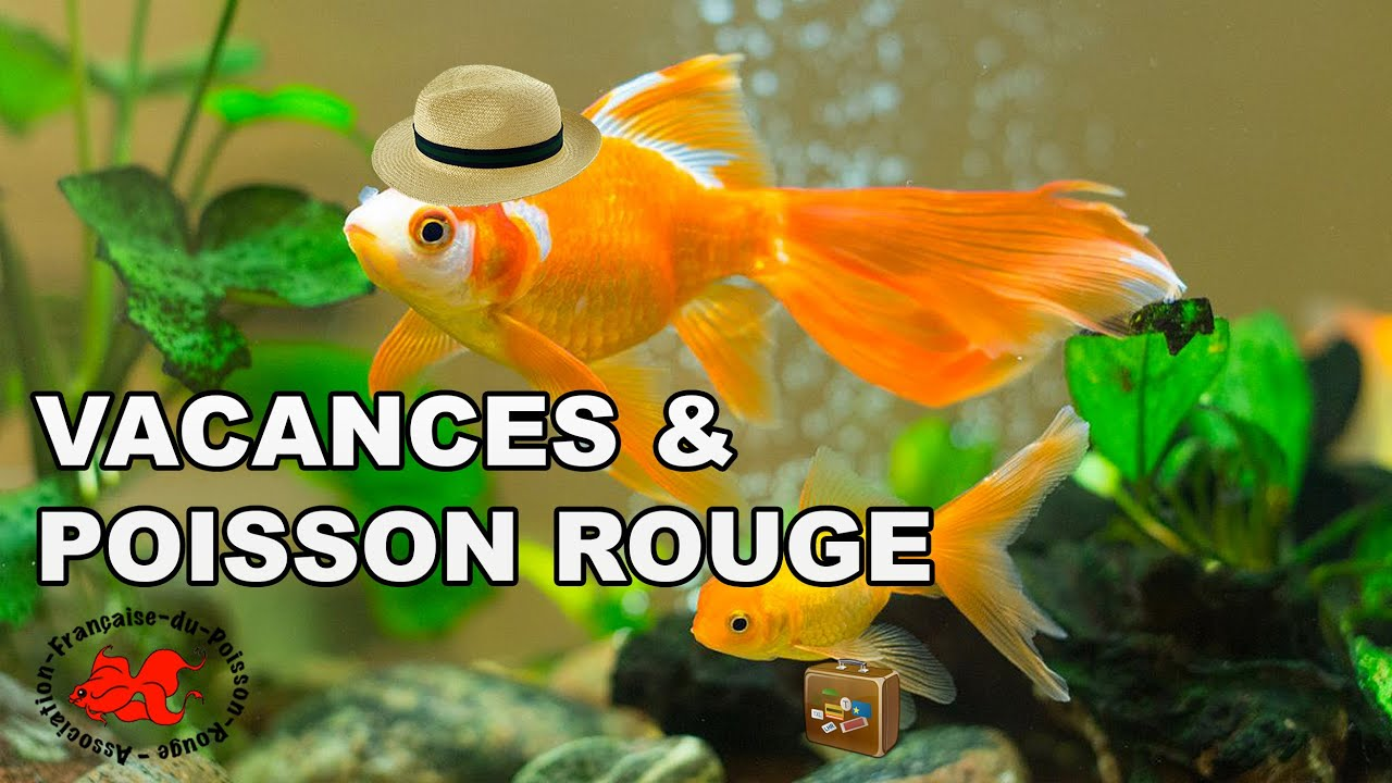 Vacances poisson rouge youtube for Distributeur automatique nourriture poisson rouge
