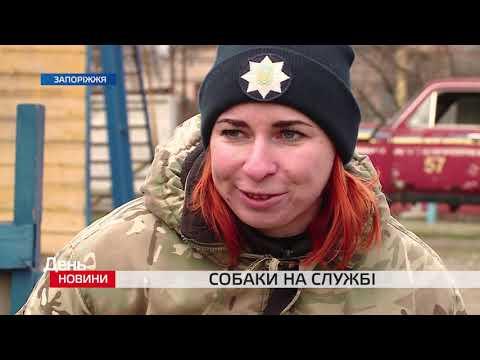 День. Новини TV5. Випуск 17-00 за 16.01.2020