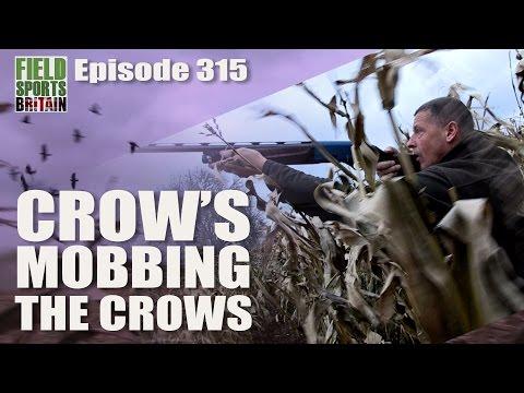 Fieldsports Britain - Crow's Mobbing the Crows - 동영상