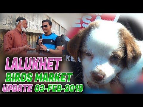 Lalukhet Sunday birds market 3-2-2019 Updates (Jamshed Asmi Informative Channel) In Urdu/Hindi
