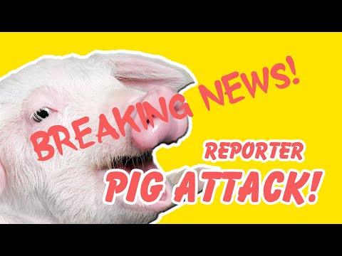 Coe Lewis - Funny Video of TV Reporter Getting Attacked By A Pig