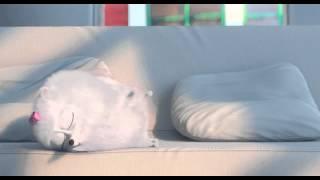 Тайная жизнь домашних животных Русский тизер трейлер 2016 HD online video cutter com