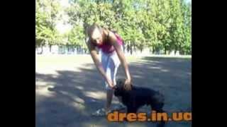 Команда  Рядом. Урок Видео по Дрессировки и обучении собаки