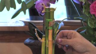 Gardening Tips : How to Grow Lucky Bamboo