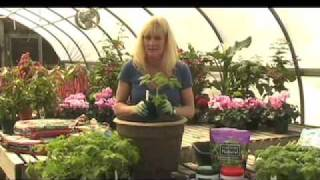 How to Grow Tomatoes in a Container - White Flower Farm