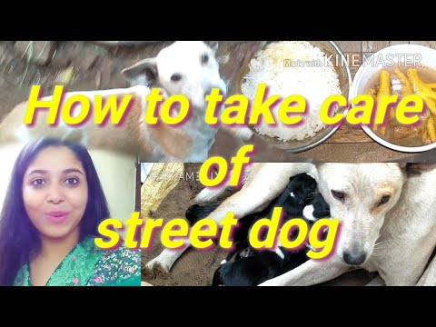 How to take care of a street dog and puppy