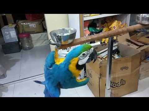 Macaw and all kind of parrot you buy now