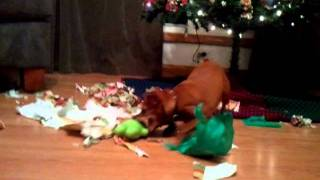 Dog Christmas Gift Opening Insanity