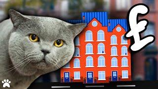 Preparing To Buy A British Shorthair House Cat