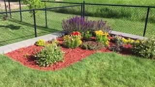 Góc vườn nhỏ sau nhà