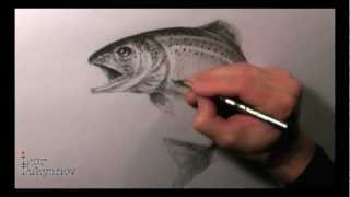Drawing a Trout
