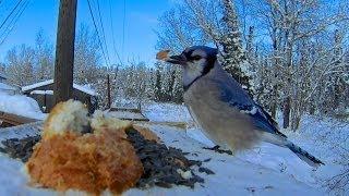 GoPro Hero 3 Bird Feeder Cam