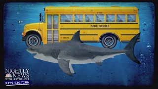 Diving Into The World Of Sharks | Nightly News: Kids Edition