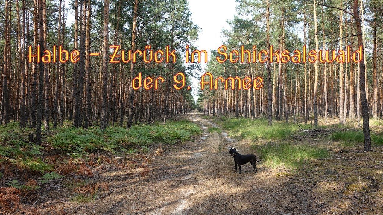 Schicksalswald