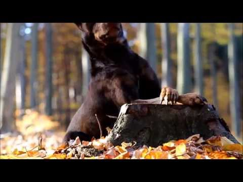 Autumn Dog Tricks 2015 - border collie MALI & kelpie NILLA