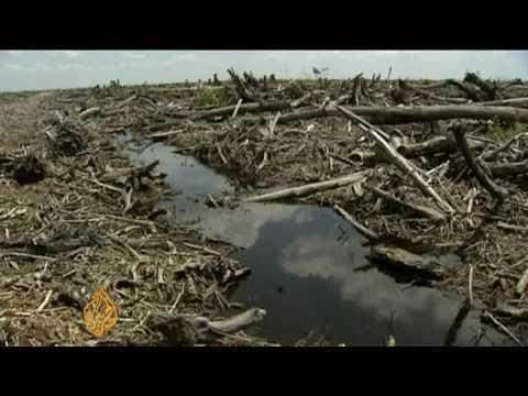 Borneo's burning forests - 14 Jul 09