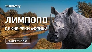 Лимпопо | Дикие реки Африки | Discovery