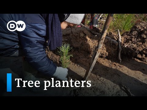 Russia: A passion for reforestation | Global Ideas