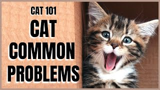 Cats 101 : Common Cat Problems