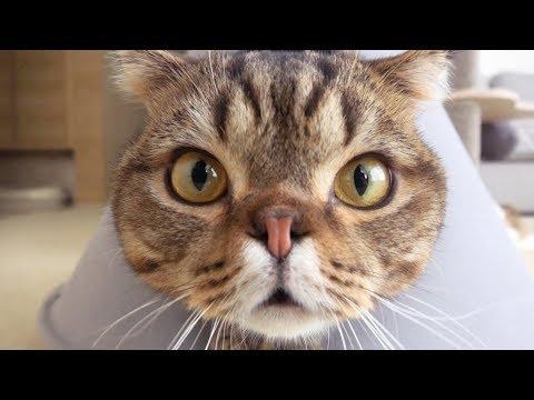 칠면조를 데려왔더니 고양이들이 난리가 났어요!