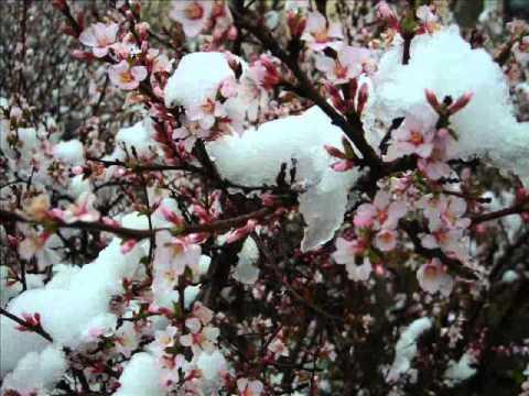 Мелодия из фильма зимняя вишня
