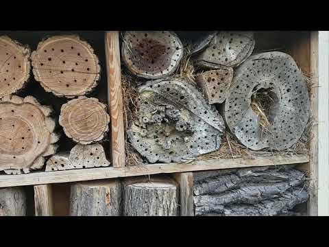 Bienenhaltung und Wildbienenschutz