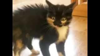 Funny Cats!  Смешные коты!Коты отжигают,пушистики,смотреть всем!