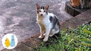 Остров Бали опасный кот в кафе Шинта, Индонезия