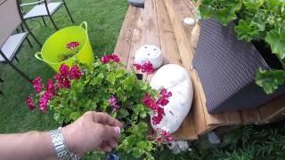 Gardening tips Canada
