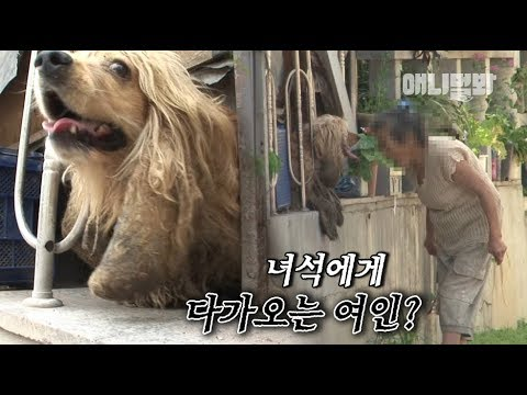 Fight of Animals 動物之鬪 - 走路貓咪、魔法松鼠、烏鴉猩猩 TrailerKaynak: YouTube · Süre: 1 dakika14 saniye