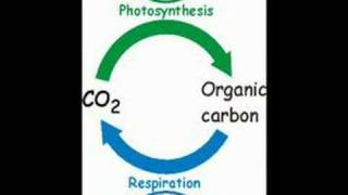 Carbon Cycle Video - Lesson Starter