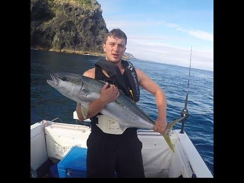 Bay Of Island Kingfish 2017