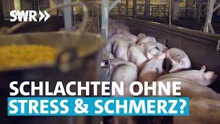 Tierschutz: Besser schlachten? | SWR odysso - Das will ich wissen!
