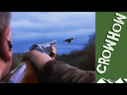 Dry February pigeon shoot - it's Crowhow Mp3