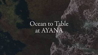Ocean to Table | AYANA Resort and Spa, BALI