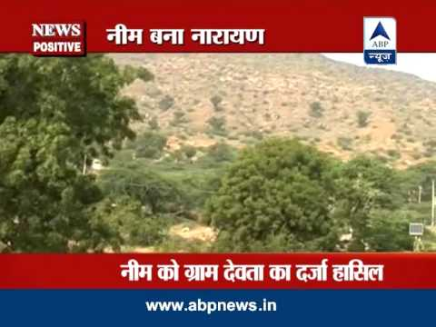 ABP News Positive: Neem trees saving environment in this Rajasthan village