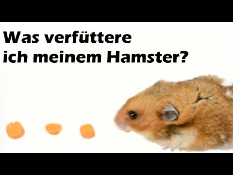 was fressen hamster gerne wikiwie. Black Bedroom Furniture Sets. Home Design Ideas