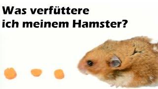 Was verfüttere ich meinem Hamster?