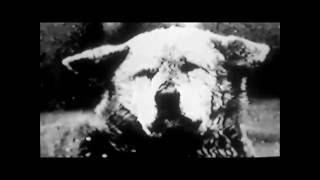 Редкие кадры из старой киноленты на которой Хатико ещё жив