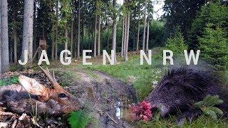 Bunte Bockjagd im Wildreichen Westen - Jagd im Mai 2018 - JagenNRW